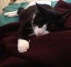 Angora Decke für Hund und Katze